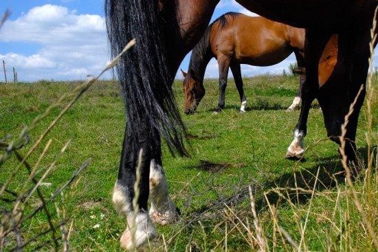 chevaux13.jpg