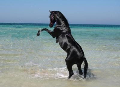 chevaux51.jpg